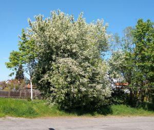 Impuls für den Tag – 28.04.2020 – In voller Blüte