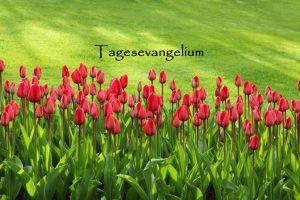Impuls für den Tag – 16.04.2020 – Der Friede sei mit euch!