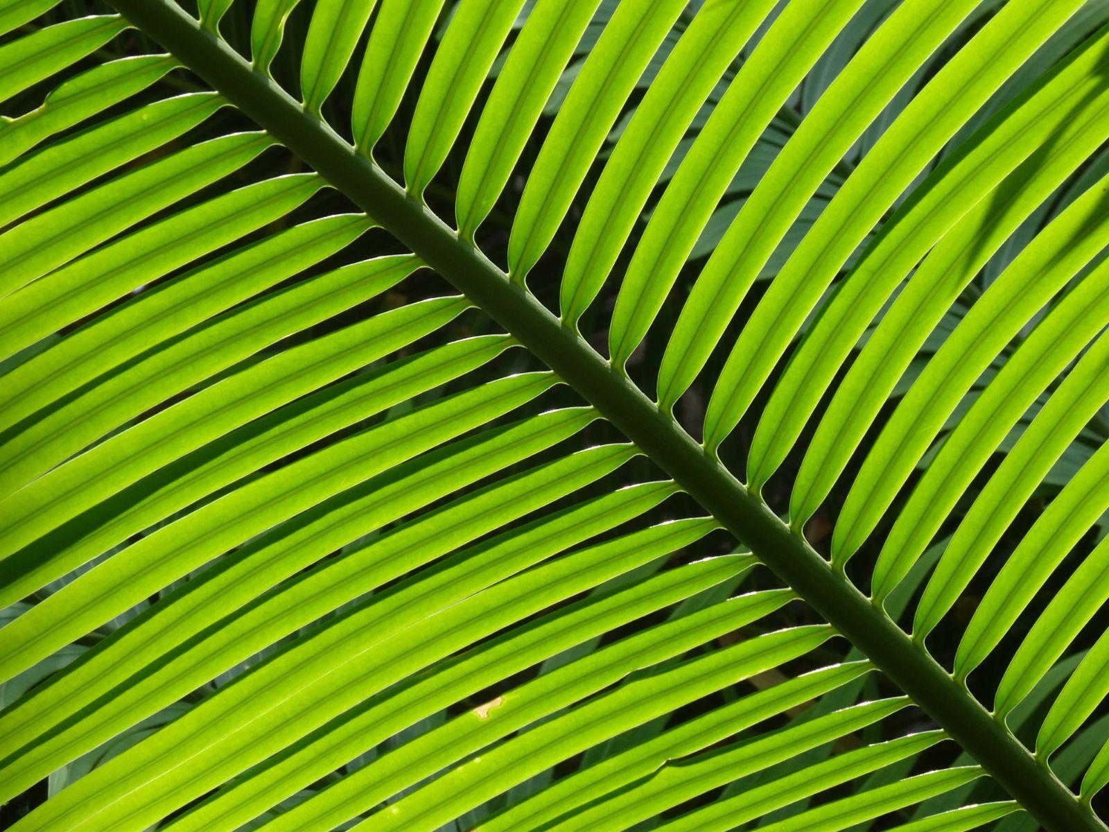 Impuls für den Sonntag – 05.04.2020 – Palmsonntag