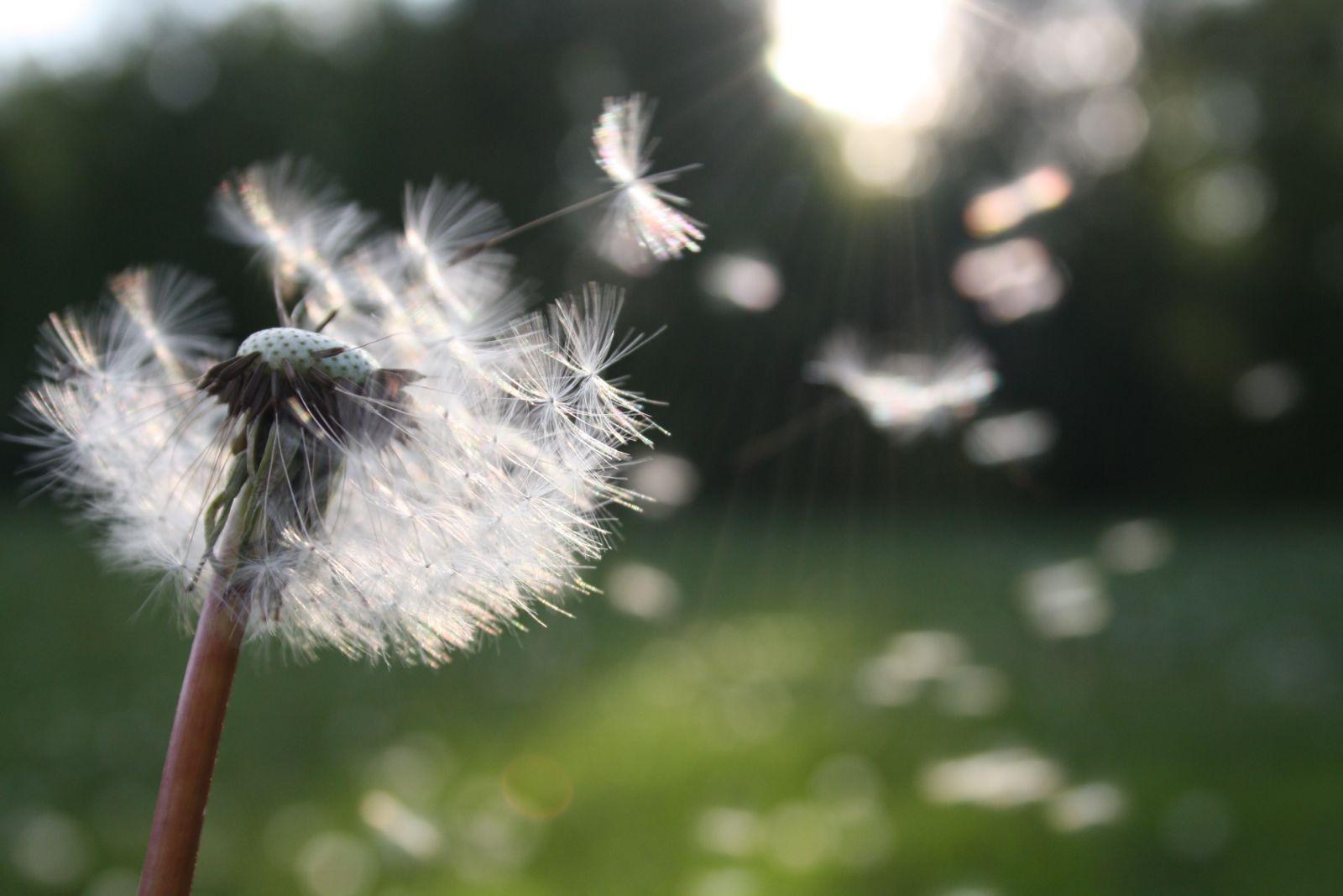Impuls für den Tag – 05.05.2020 – Atem holen ist wie Beten