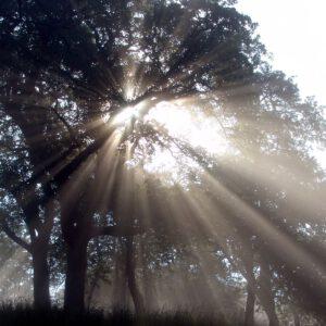 Impuls für den Tag – 06.06.2020 – … wie Wärm aus Sonn und Glanz entsteht