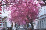 Frühlingserwachen | Geistlicher Impuls | 12.05.2021